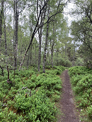 a path in the Anagach Woods