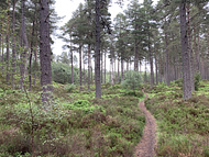 another path in the Anagach Woods