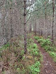a third path in the Anagach Woods