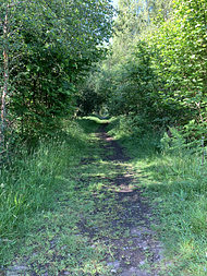 a section of the Speyside Way; at this point it's a disused railway line, and the trees on either side were curling over to form a tunnel