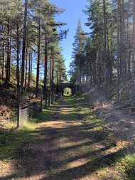 a section of the Speyside Way; still a railway track, going under an old bridge with woodland on either side